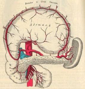 img-anatomy